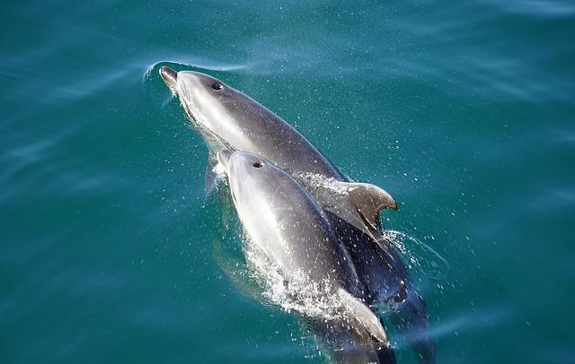 delfin con cria