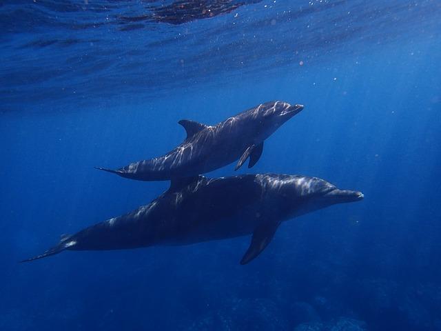 crias delfines