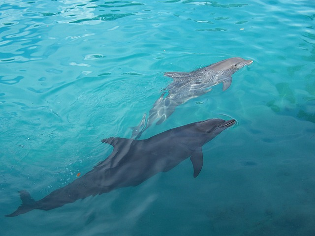 delfin cria