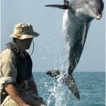 delfin militar