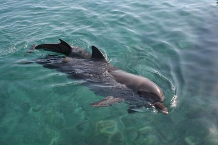 delfin recien nacido