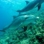 grupo delfines