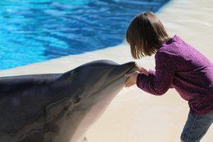 delfines y humanos