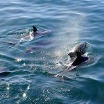 delfines-salvajes