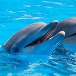 delfin nariz botella
