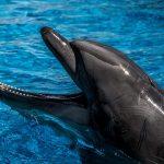 delfin de cerca