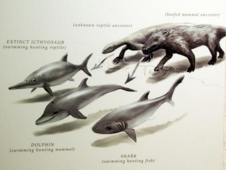 evolucion delfin
