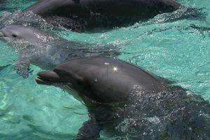 fotografia de delfin