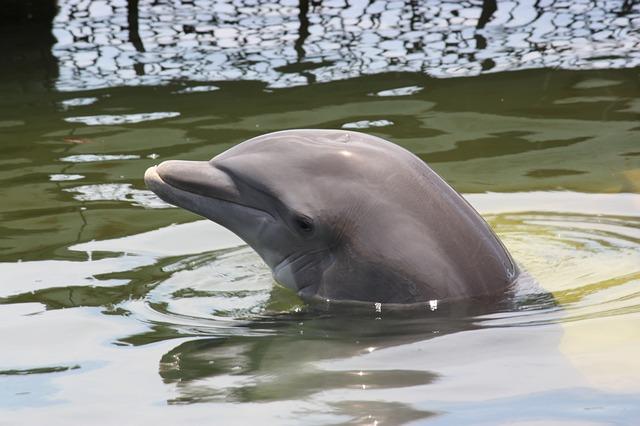Grabaron por primera vez a dos delfines
