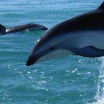 delfin-foto