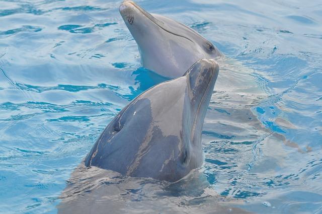 pareja delfines